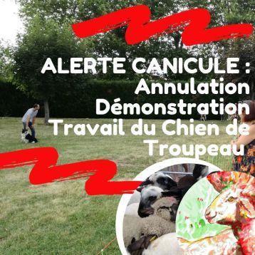 ALERTE CANICULE _ Annulation Démonstration Travail du Chien de Troupeau